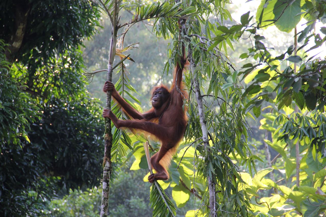 WNF rainforestlighting sponsort Wereldnatuurfonds WNF voor behoud regenwouden