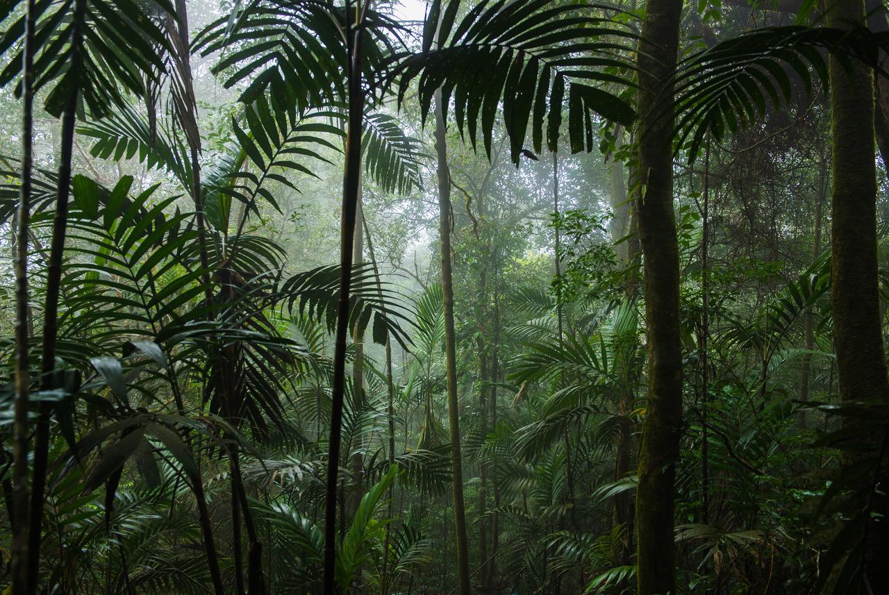 WNF rainforestlighting doneert aan Wereldnatuurfonds WNF voor behoud regenwouden