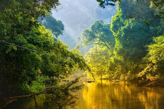 Duurzaam Rainforest